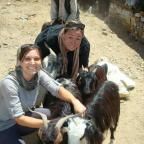 Wagner student Gwen Neely helps wrangle goats during a distribution in a former refugee community ju