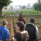 Visiting an Urban Farm with Alliance for a Green Revolution in Africa (AGRA), in Accra. Photo by San
