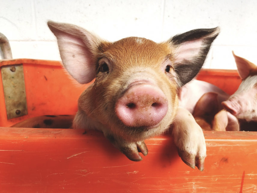 Debating Animal Welfare Policy: Examining the Ethics of Eating Animals