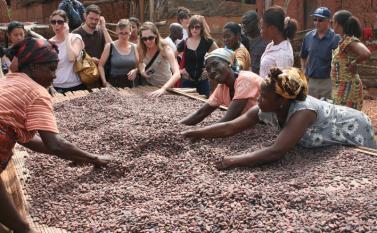 Cocoa beans at Kuapa Kokoo Cocoa farm outside of Kumasi Photo by Sandra Vu